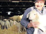 Leseraktion: AN-Adventskalender: Schafe, Schäfer und unsere Leser gewinnen