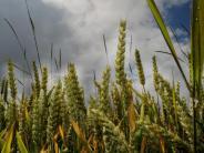 Genossenschaft:  Warengeschäft: Raiba Aresing kooperiert mit Agrar Center