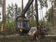 Kreis Aichach-Friedberg: Nach Tornado besteht im Wald Lebensgefahr