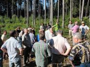 Natur: Aufgepasst:Der Borkenkäfer ist im Wald