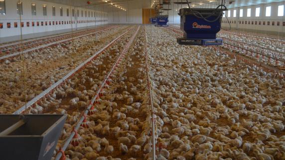 Vogelgrippe! Geflügel hat in Thüringen jetzt Stallpflicht