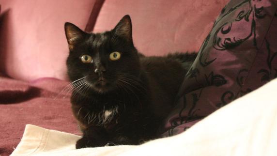 Aus Auto befreit | Eingesperrte Katze wählt Notruf