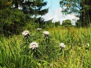 Ökologie: Was blüht der Natur im Landkreis?