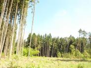 Natur: Borkenkäfer schwärmen im Wittelsbacher Land