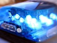 Unterallgäu: Nasenbär wurde von der Polizei festgenommen
