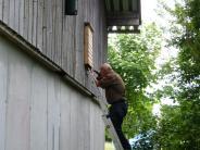 Aktion: Neue Nistkästen als Quartier für Fledermäuse