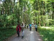 Natur: Wanderung im Ebenrieder Forst lässt Besonderheiten entdecken