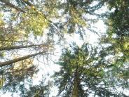 Borkenkäfer: Wenn's ruckzuck licht wird im Wald