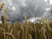 Wirtschaft: Ernte: Bauern im Wittelsbacher Land sprechen von Extrem-Jahr
