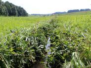 Aichach-Friedberg: Fische sterben in Ried nach Panne in Biogasanlage