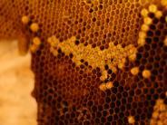 Polizeibericht: Unbekannter stiehlt Bienenstock