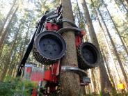 Versammlung: Waldbauern warten auf höhere Holzpreise