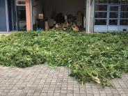 """Polizei: Cannabis-Plantage: Wer ist der """"Gärtner""""?"""