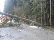 Polizei: Unwetter: Baum stürzt Frau vors Auto