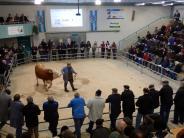 Viehmärkte: Die Geschichte eines Kuhhandels