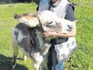 Altenmünster-Baiershofen: Am Anfang war der Esel