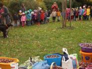 Umwelt: Mit großem Eifer Kastanien gesammelt