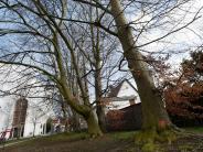 Neusäss: Neue Bäume für den Ägidius-Park