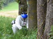 Nördlicher Landkreis Augsburg: Die giftigen Raupen machen sich breit