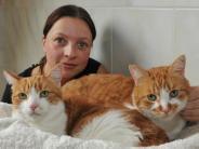 Altenmünster-Eppishofen: Katzen werden in Boxen hinter Auto ausgesetzt
