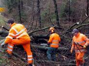 Landkreis: Für Waldbesitzer ein Glücksfall