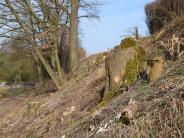 Kutzenhausen-Agawang: Neue Eichen nach der Fällaktion