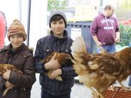 Meitingen: Bummeln, Kaufen und Tiere streicheln
