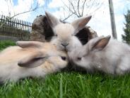 Horgau: Kaninchen müsste man sein!