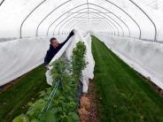 Landkreis Augsburg: Wie man seine Pflanzen schützen kann