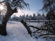 Zusmarshausen: Bäume brechen unter der Schneelast