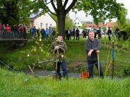 Projekt: Im Regen wachsen die Bäume gut an