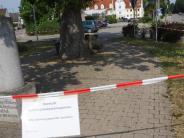 Horgau: Eichenprozessionsspinnerauch in Horgau