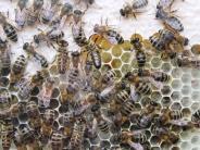 Welden: Unbekannte wüten an einem Bienenwagen