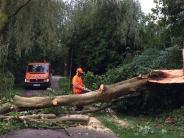 Bilanz: Unwetter: Viele umgestürzte Bäume