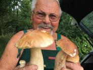 Landkreis Augsburg: Pilzsammler im Glück