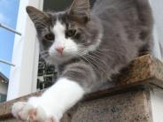 Kreis Augsburg: Im Herbst verschwinden besonders viele Katzen