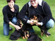 Rottweiler: Hündin Cobra bringt Vierlinge zur Welt