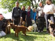 Stauden: Das schwere Schicksal der Hunde aus Italien