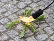 Meitingen/Neusäß: Unkrautbekämpfung: Ein Spiel mit dem Feuer