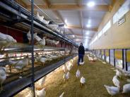 Adelsried: Ihr Leben ist der Hühnerhof
