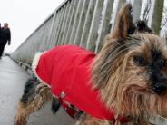 Haustiere: Warum Hunden im Winter die Pfoten schmerzen