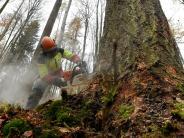 Landkreis Augsburg: Wie einBaum aus Zusmarshausen zur edlen Bodendiele wird