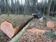 Wald: Vom Baum zur edlen Bodendiele
