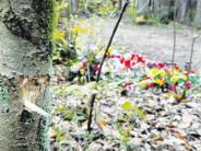 Ermittlungen: Das Protokoll der tödlichen Falle