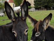 Ortstermin: Landleben in Haunstetten