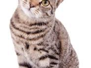 Justiz: Fristlose Kündigung wegen 18 Katzen