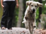 Kommentar: Diskussion um Leinenpflicht: Hundehalter sind in der Pflicht
