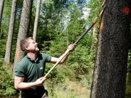 Augsburg: Wie das Wetter den Wald verändert