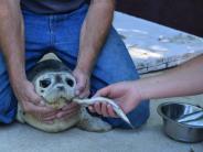 Zoo Augsburg: Seehund-Baby ohne Mama muss von Hand aufgezogen werden