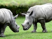 Region: Von AEV bis Zoo: Das sind die Tipps fürs Wochenende